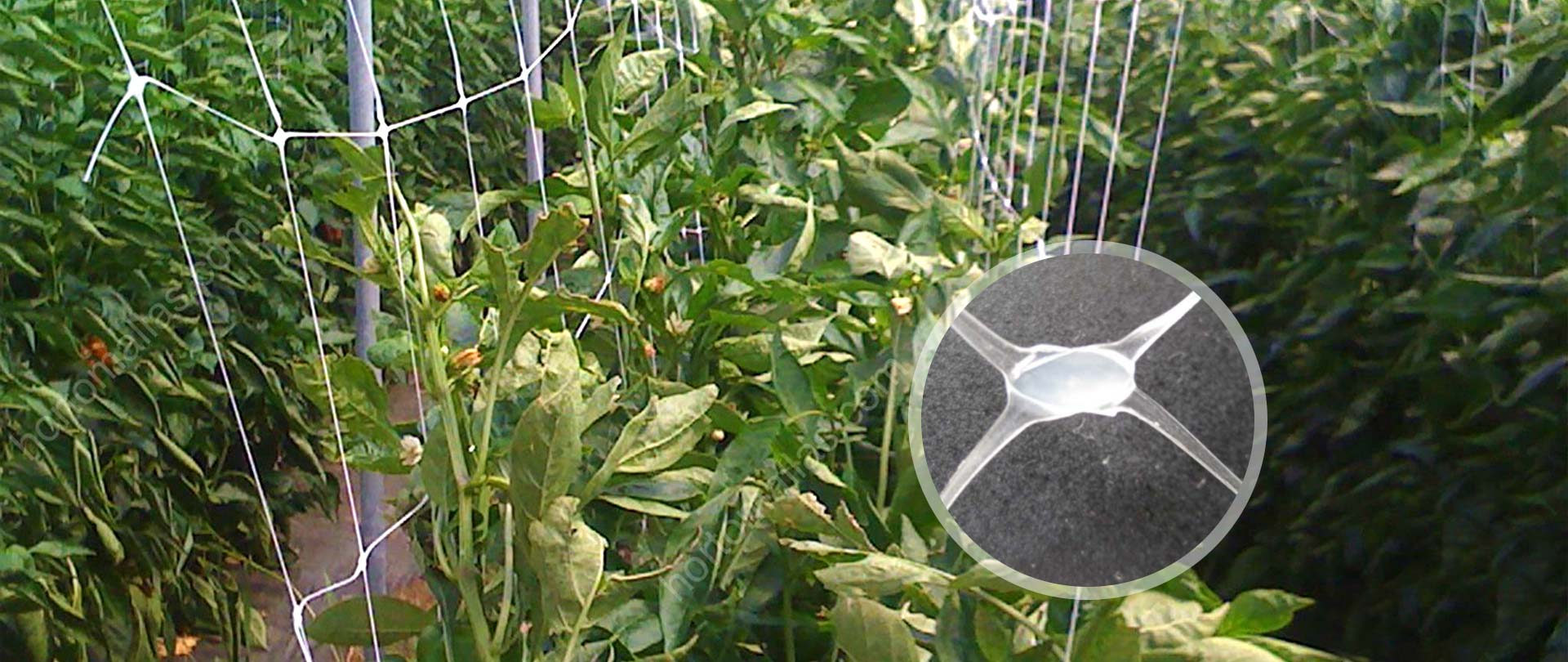 Trellis Netting/Plant Support Net