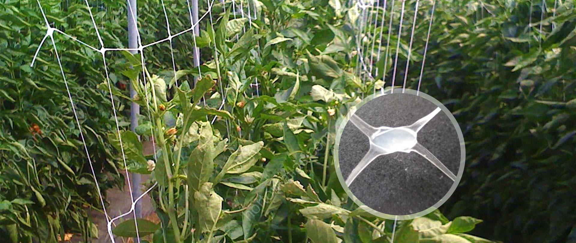 Trellis Netting/Plant Support Net